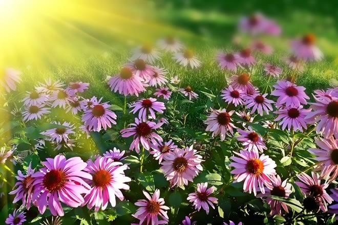 FP Baix Empordà | Grau Mig - Jardineria i floristeria